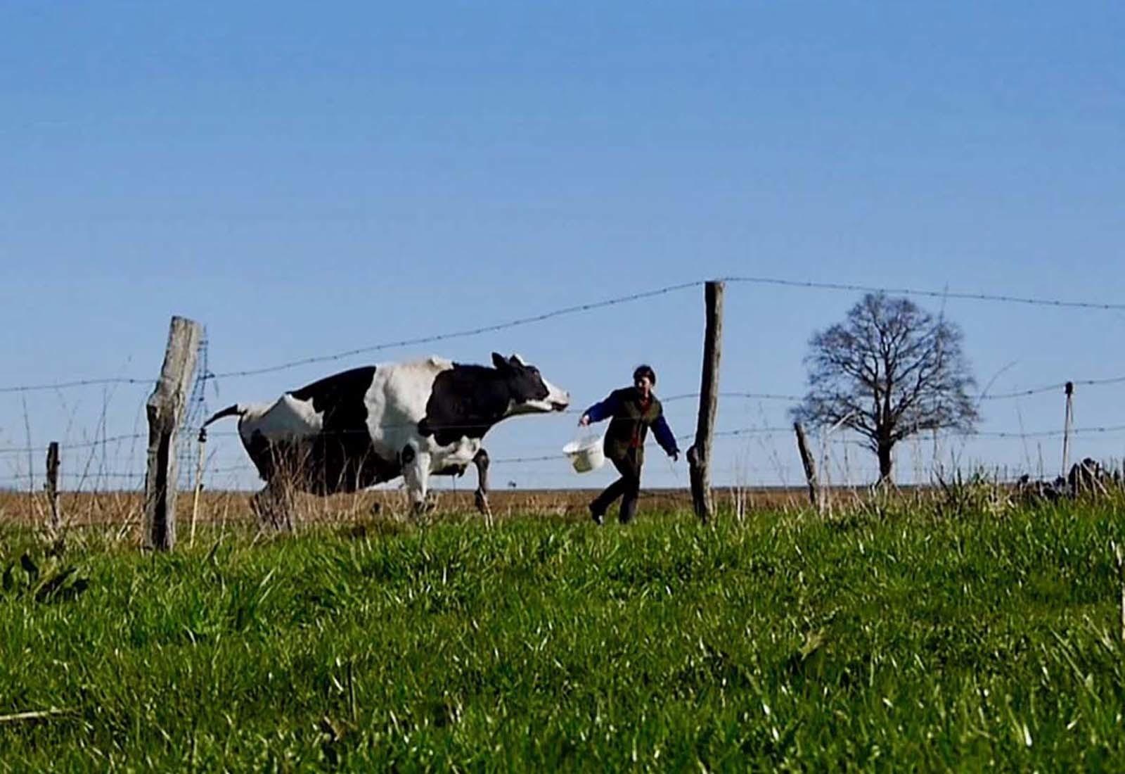 Séance de 4 courts-métrages : mondes paysans 1 |